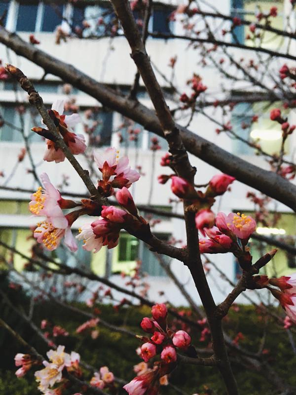 《一七年初春》